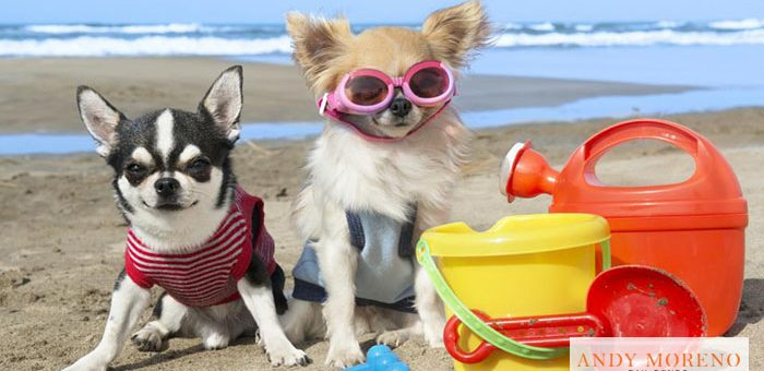 Southern California's Dog-Friendly Parks and Beaches
