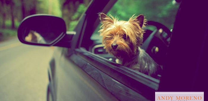 Save a Dog from a Hot Vehicle