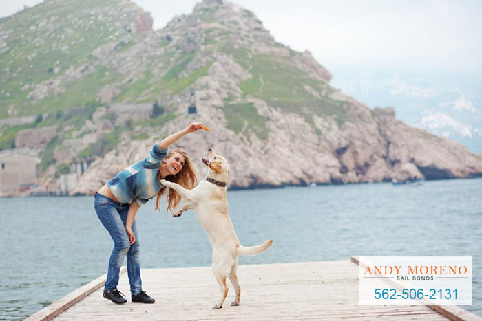 Do You Know What You Are Liable for When It Comes to Your Dog?