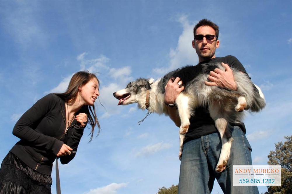 California Dog Bite Laws